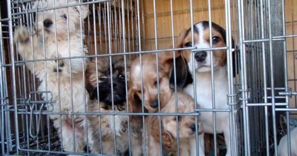 Projeto de Lei do Senado quer proibir venda de animais de estimação nas ruas
