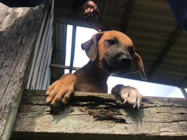 Cães abandonados em casa buscam abrigo após dono ser preso em Manaus