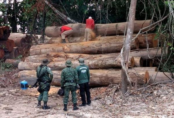 Ipaam aplica mais de R$ 9 milhões em multas por desmatamento no AM