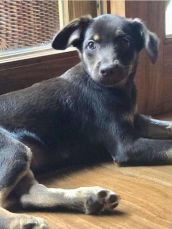 Thaís Araujo e Lázaro Ramos adotam cãozinho do Instituto Luisa Mell