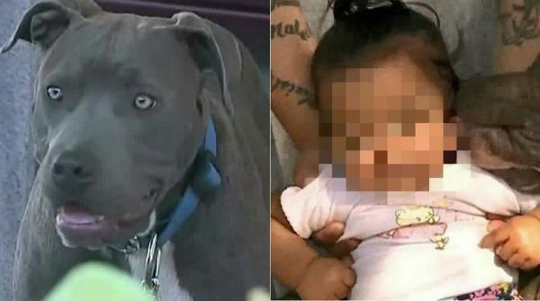 Pitbull arrasta bebê pela fralda e salva criança de incêndio