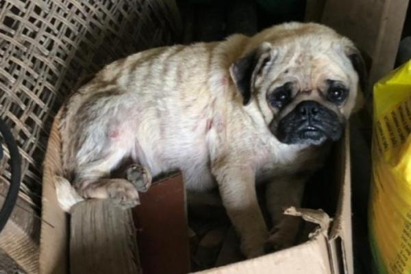 Homem é preso suspeito de maus-tratos contra mais de 40 cães