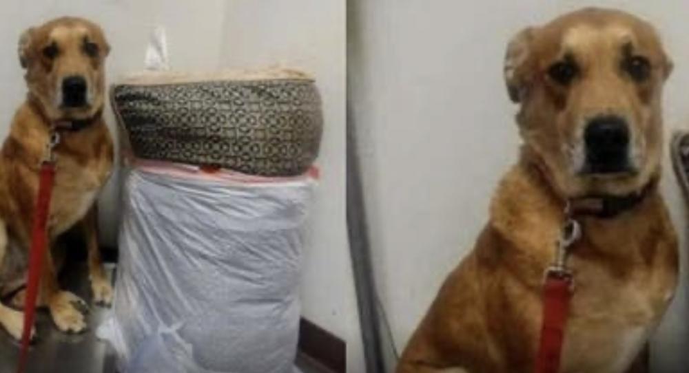 Cãozinho é abandonado em abrigo com sua cama e todos os seus brinquedos