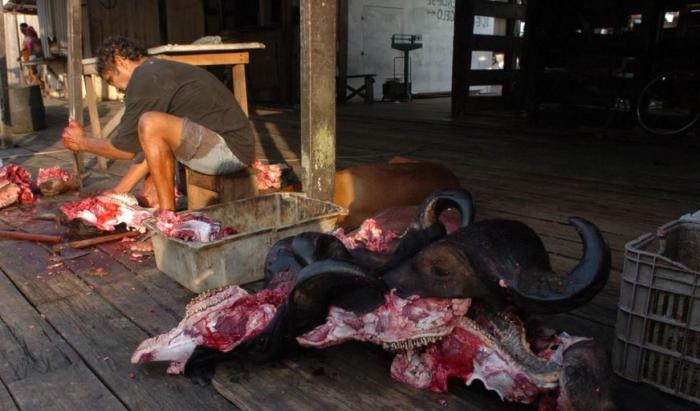 Maioria dos municípios do AM consome carnes de abatedouros clandestinos