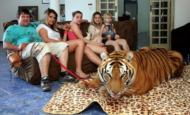 Domesticação de animais selvagens é motivada pelo egoísmo humano