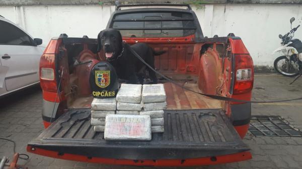 Mais de 15 quilos de droga são apreendidos em veículos, no Porto de Manaus