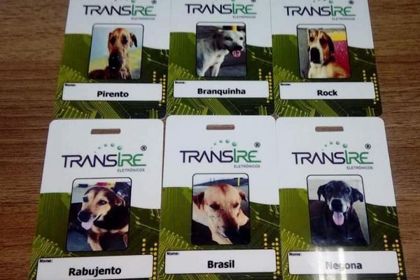 Cachorros que moram em empresa de Manaus ganham crachás