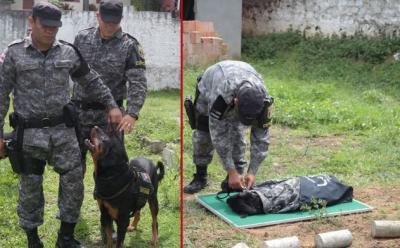 Enterro de Hórus, cão especializado da polícia
